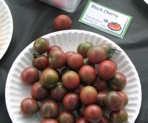 black cherry - photo from previous tomatopalooza